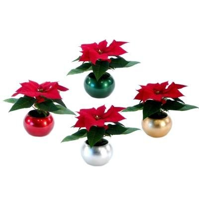 Self Watering Mini Poinsettias Each Bulb Holds Water To Keep Your Plant Happy Christmas Gifts For Coworkers Poinsettia Centerpiece Christmas Crafts