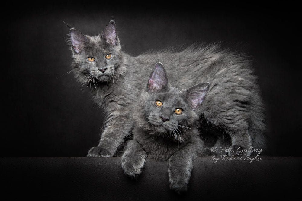 Brother and sister. by Robert Sijka on 500px