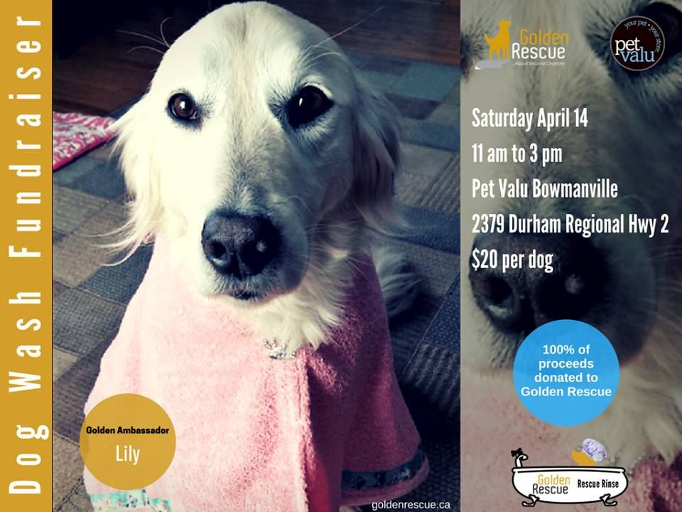 Stop By And Help Us Raise Funds For Golden Rescue Pet Valu Bowmanville Clarington Centre Is Donating Proceeds To Dog Washing Station Dog Wash Golden Retriever