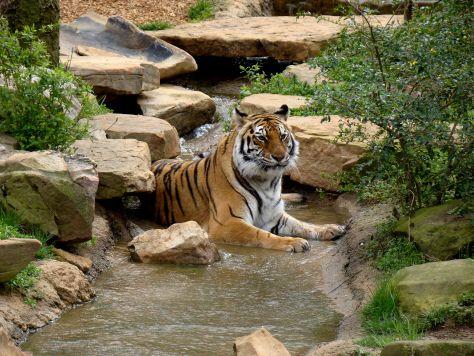 Week 13 of 52 Things 52 Weeks: Visiting the Zoo #bucketlist