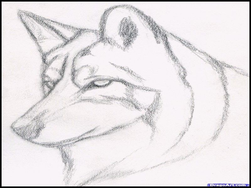 Lovely How To Draw A Wolf Step By Step With Pencil With Images