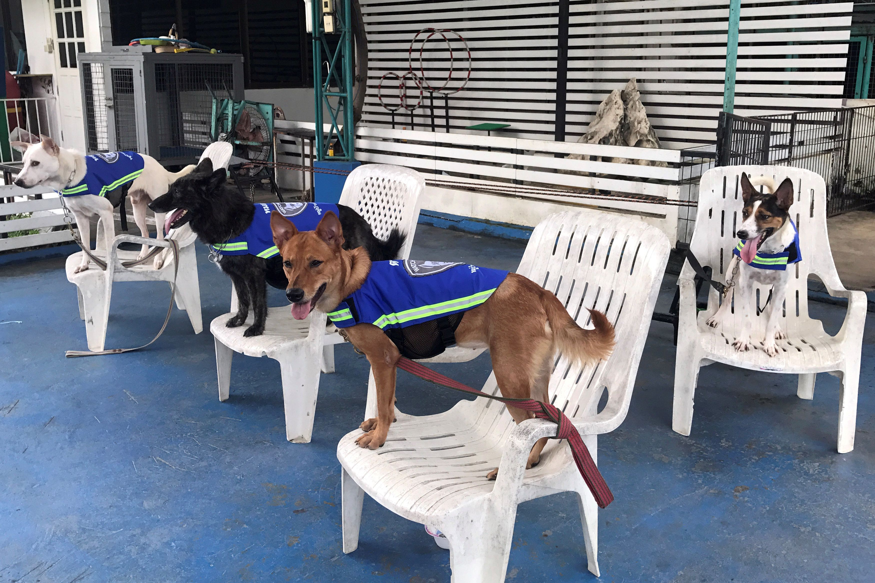 Smart Vests Turning Thailand S Stray Dogs Into Street Guardians