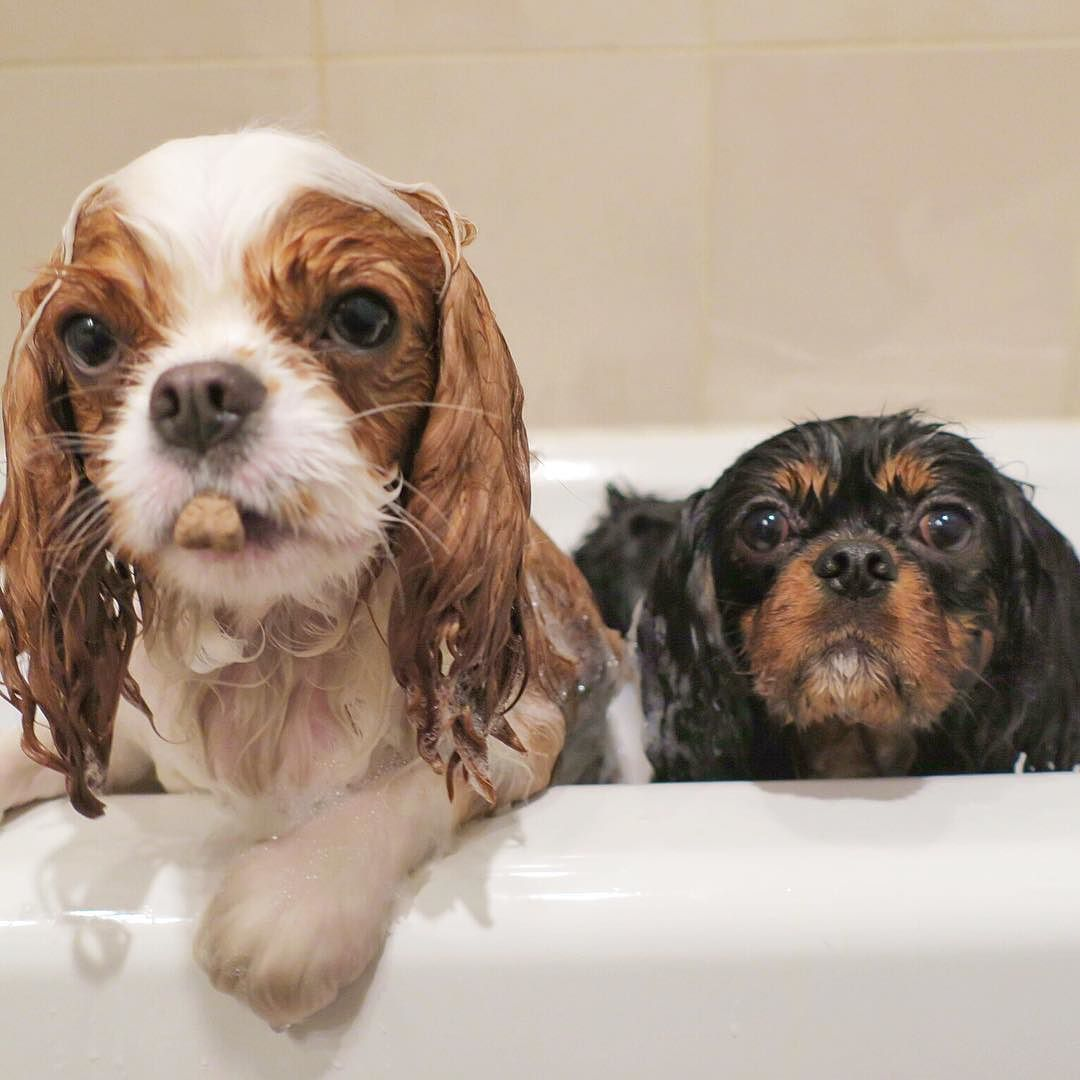 Bae Bath Biscuits Gettin Bubbly With My Boo Scbarkleythecav