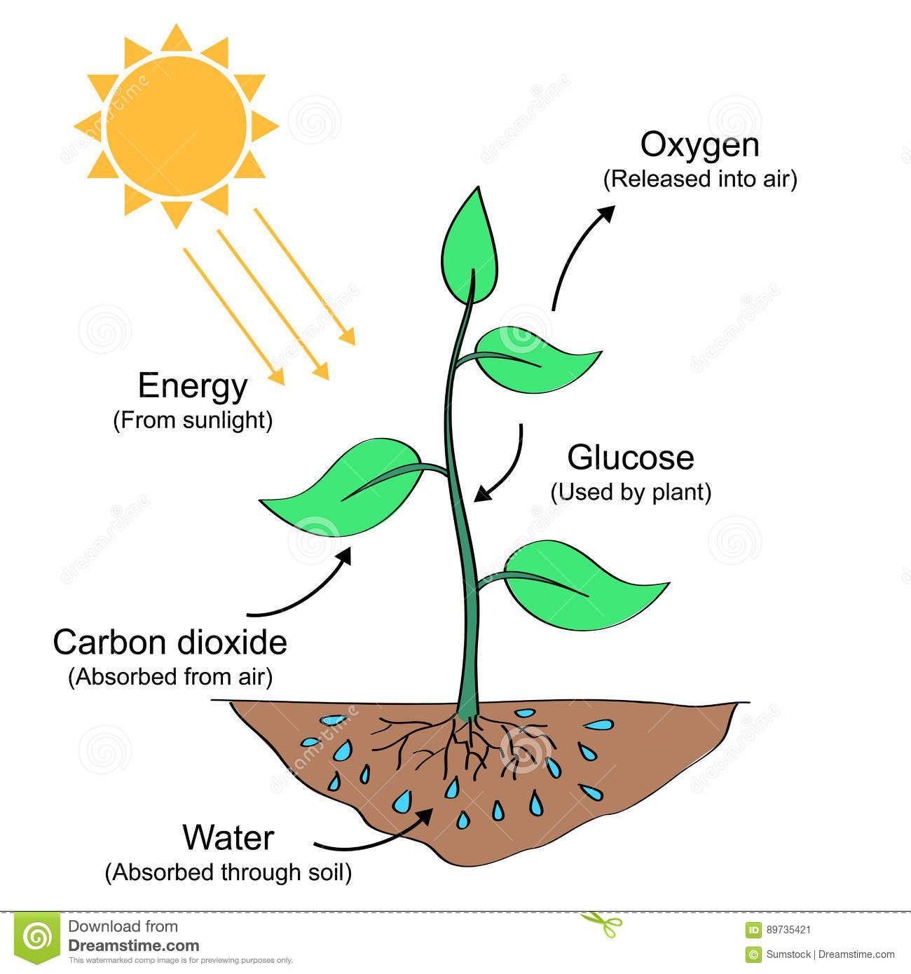 Ejemplo De Proceso De La Fotosintesis Ilustracion Del Vector Ilustracion De Suelo Sunligh Proceso De La Fotosintesis Fotosintesis Y Respiracion Fotosintesis