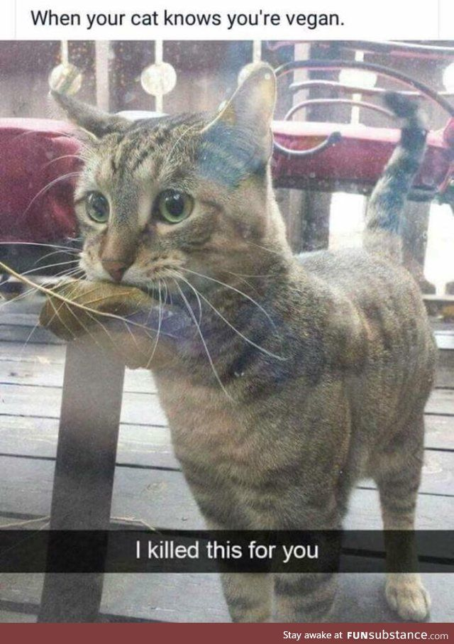 Vegan Cat Cute Lolcats Funny Animals Cute Funny