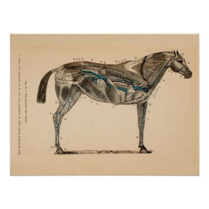 Horse Veins Heart Anatomy French Vintage Print Vintage Heart Gifts