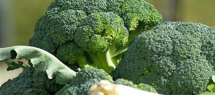 10 alimentos que aumentam a imunidade