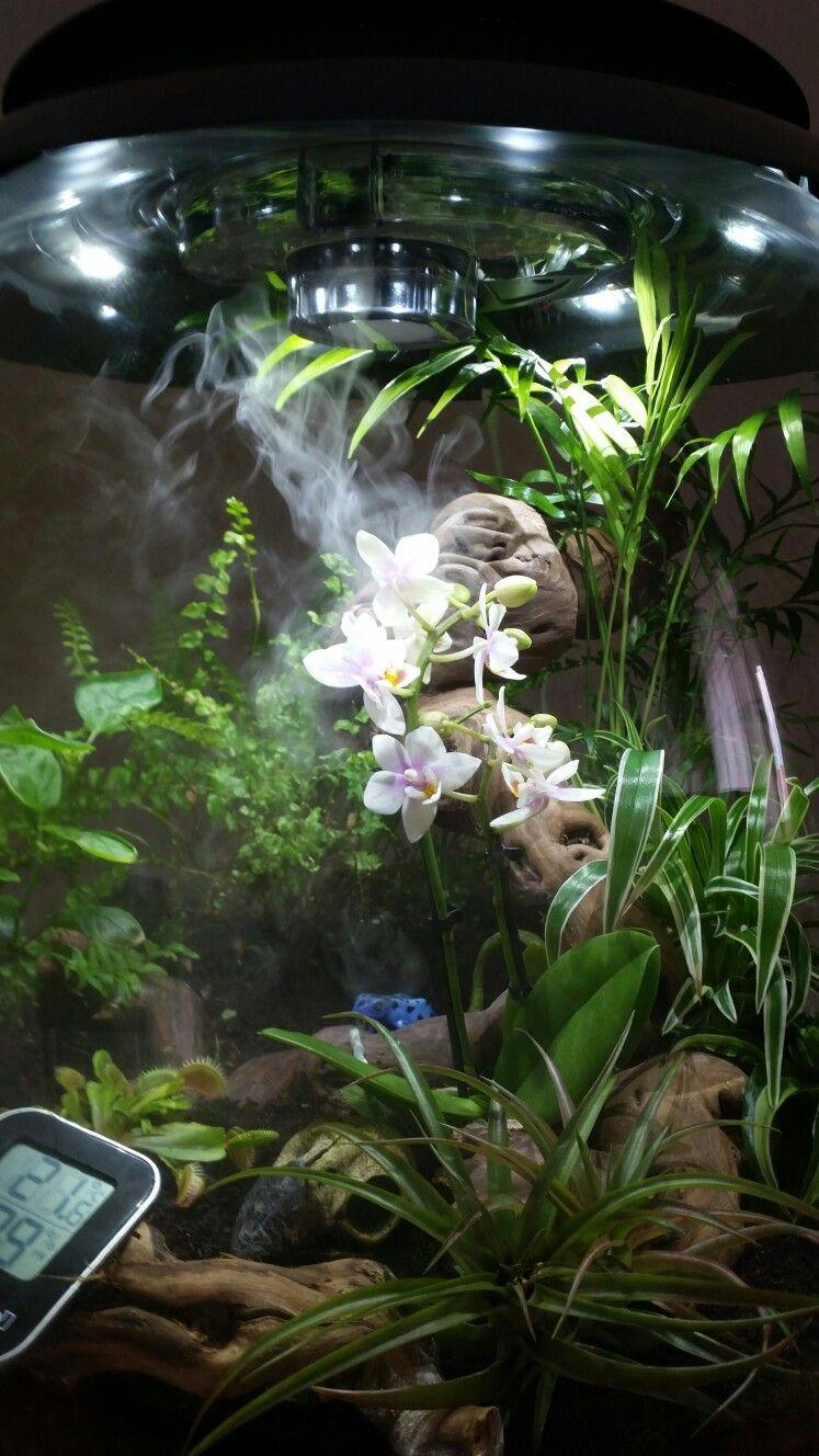 Biorb Air Terrarium Wiederbelebung Mit Mini Orchidee Und