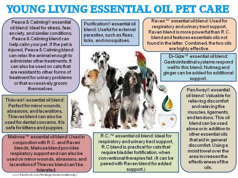 Pin Op Young Living Honden