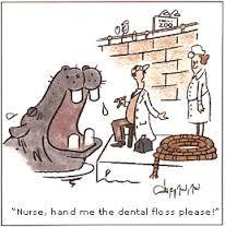 Image result for dental jokes