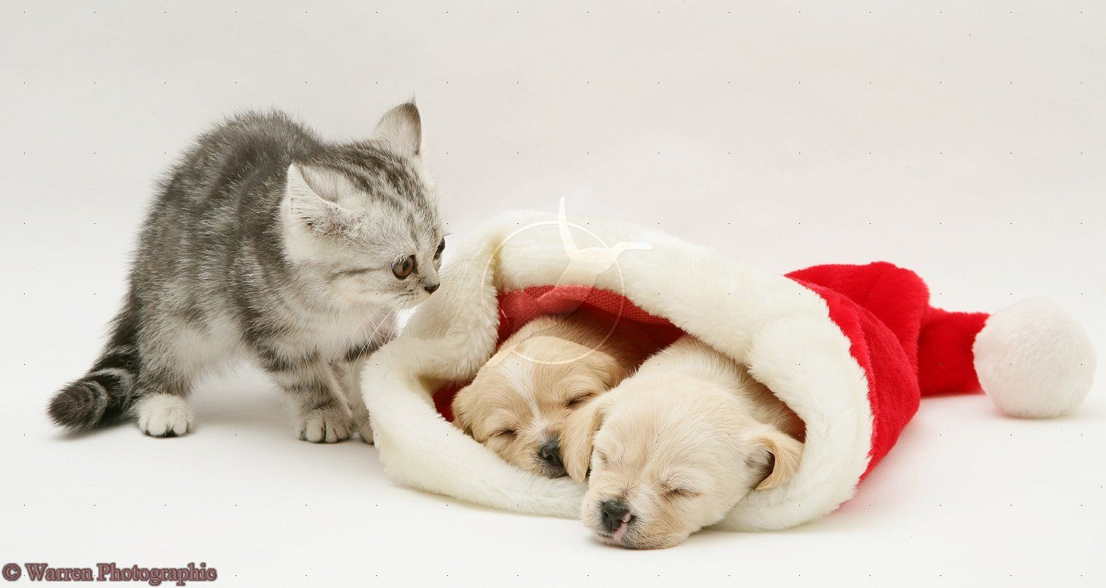 Puppies And Kittens Pictures Cute Christmas Kittens And Puppies