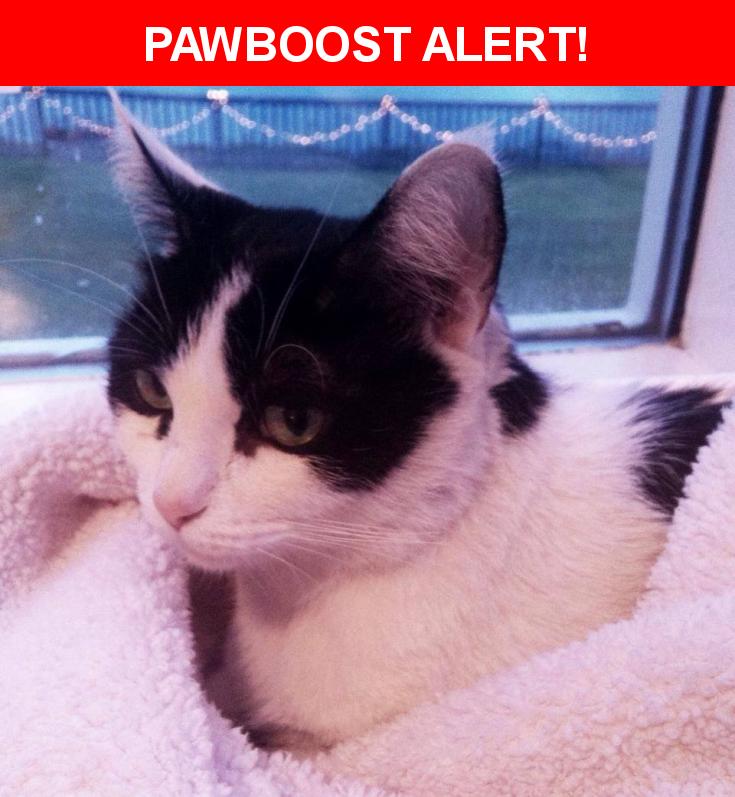 Please spread the word! Olive was last seen in Silverdale, WA 98383.    Nearest Address: Chico Way near Newberry Hill, Town: Silverdale (98383)