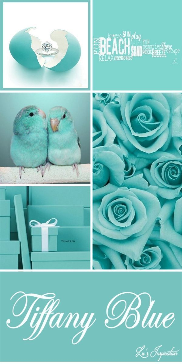 Tiffany blue | colour | Pinterest
