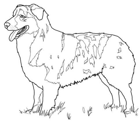 Australian Shepherd Coloring Page Horse Coloring Pages Coloring