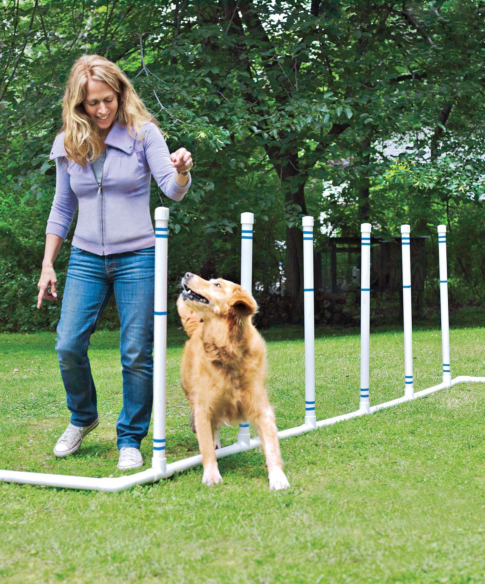 How To Build A Diy Dog Agility Course Dog Agility Dog Backyard
