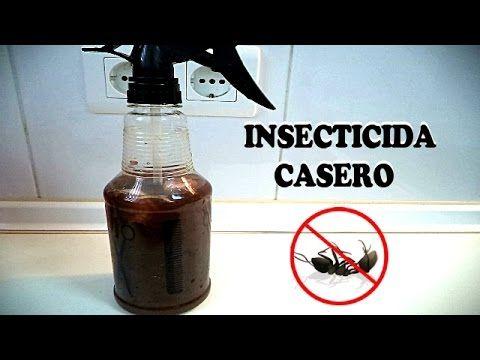 Como Acabar Con Las Hormigas Como Eliminar Las Hormigas X2f Insecticida Casero Trucos