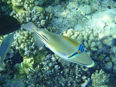 Makadi Bay, Egypt is a new resort located 35 km south of Hurghada.