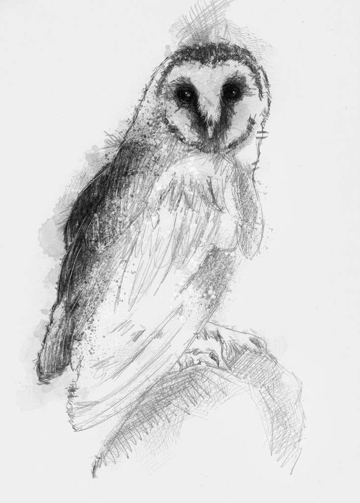 barn owl artist sean briggs producing a sketch a day prints available at https