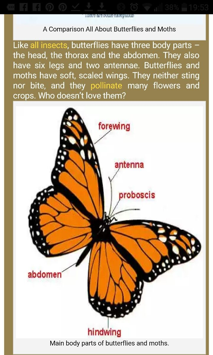 Pin by heidrie fullard on worksheets   Moth facts, Butterfly