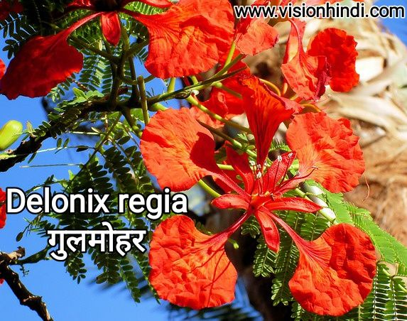 20 List Of Rare Flowers Name In Hindi With Picture सभ फ ल क न म Flowers Name In Hindi Rare Flowers Flowers Name List