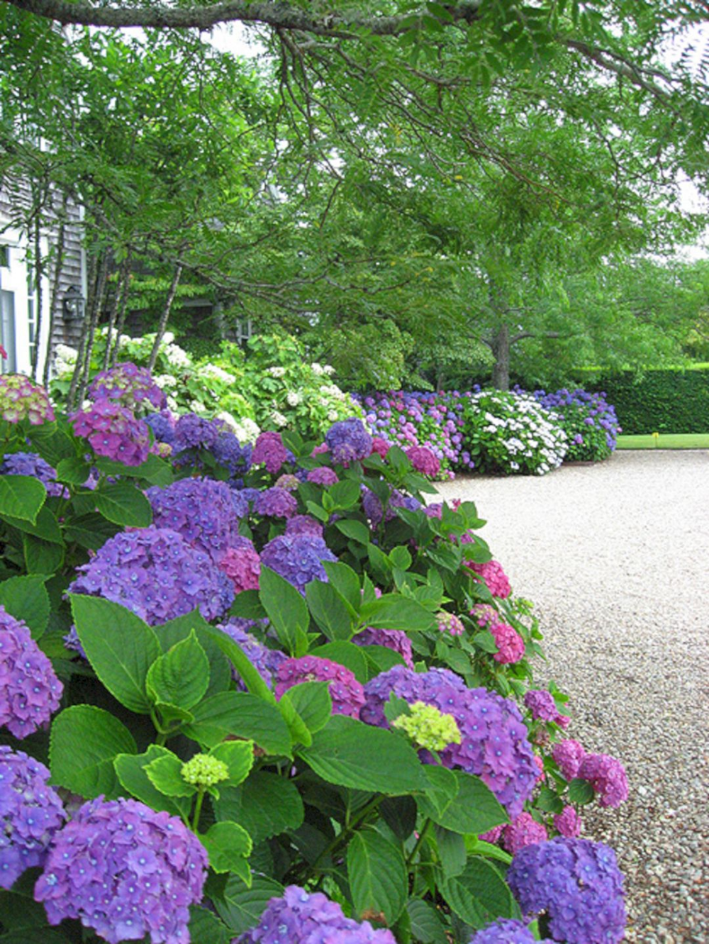 50 Most Beautiful Hydrangeas Landscaping Ideas To Inspire You 040 Decoor High Chinese Aid Miscanthus Limits The In 2020 French Country Garden Hydrangea Landscaping