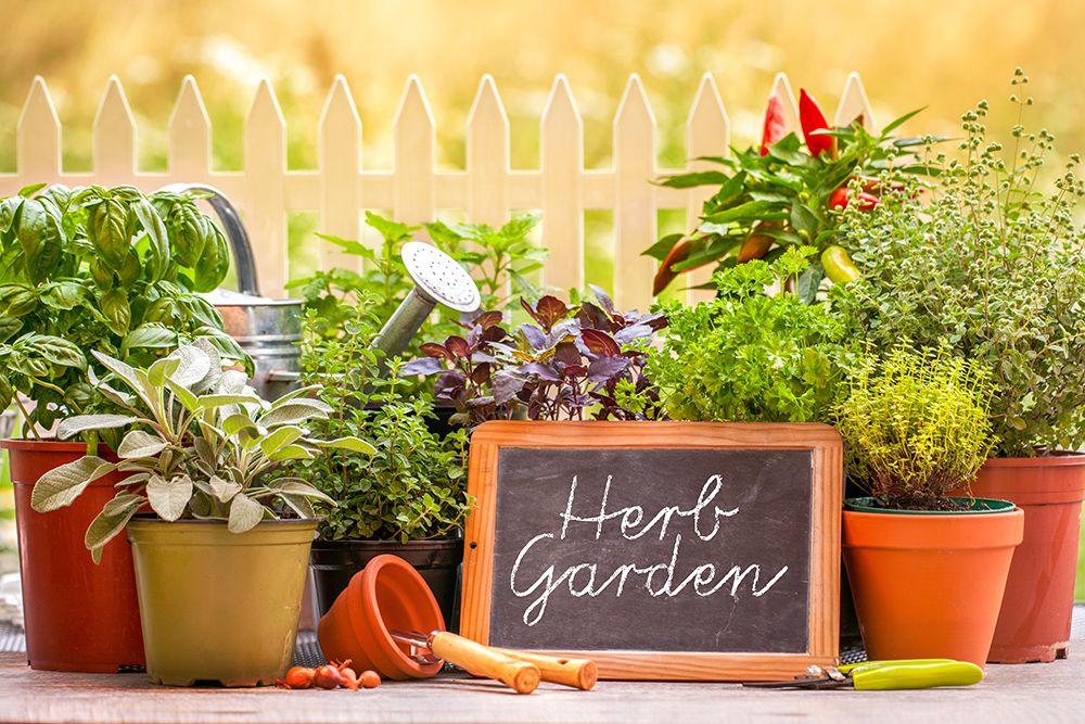 How To Grow An Herb Garden Summer 2015 Growing Herbs 640 x 480