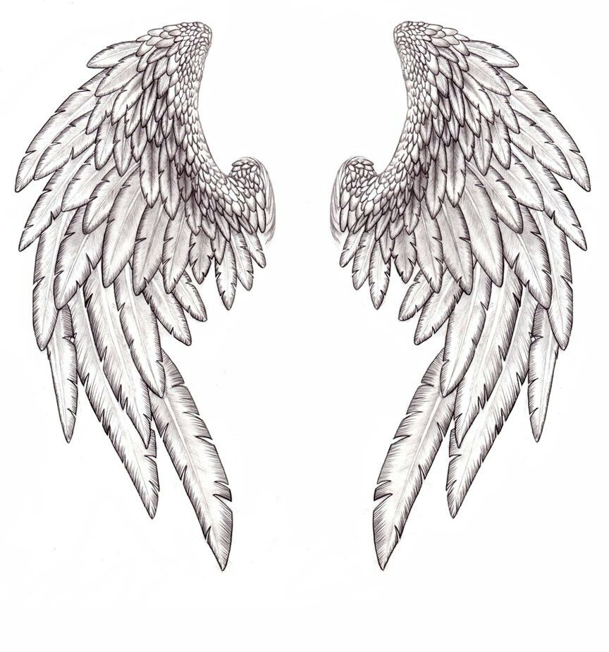 Hermes Wing With Images Angel Wings Tattoo Wings Drawing