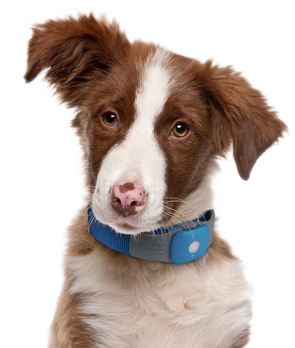 5 Best Pet Tracking Systems Reviews And Recommendations Dog