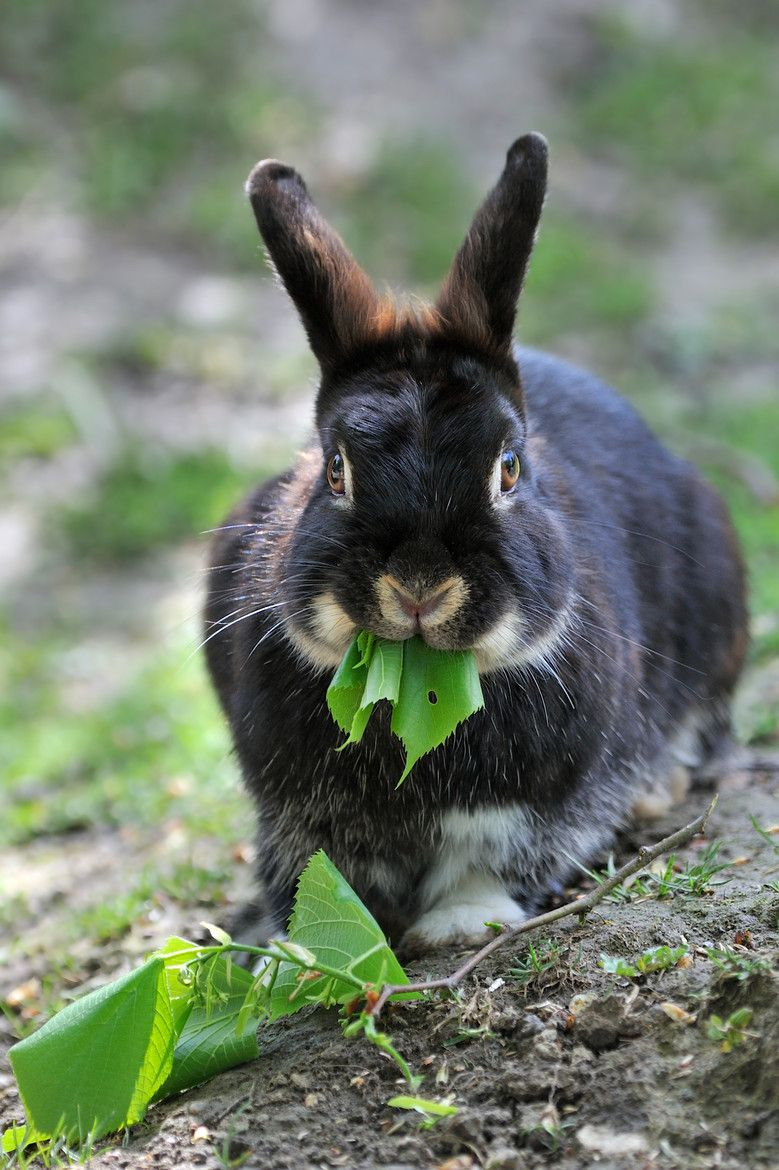 llbwwb: For the bunny lovers:) (via 500px / Easter Bunny by Josef Gelernter) - beautiful bunny