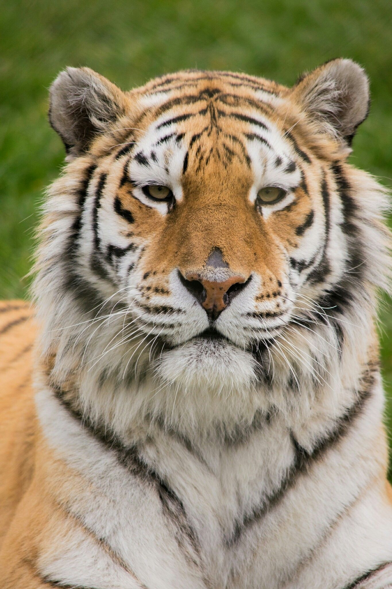 Pin by Jaunte Cunningham on big cats Wild cats, Big cats