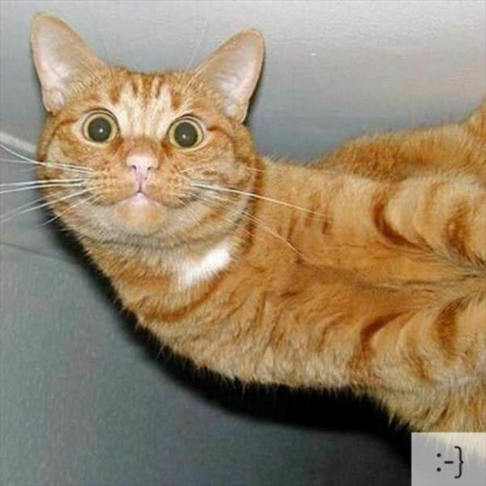 Httpssmediacacheakpinimgcomxfa - 20 hilarious cat photobombs