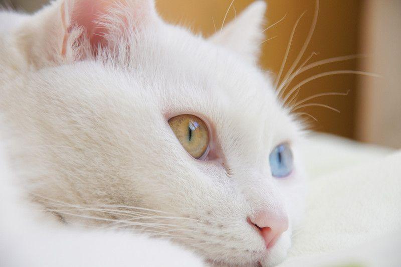 ペットを飼うのは大変なことが多い ペット ハムスター ペットショップ