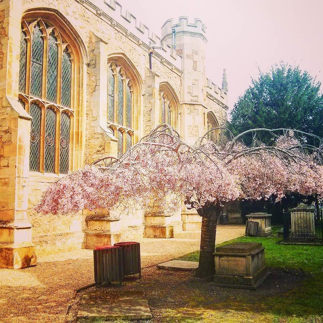 Spring is finally here in #Cambridge #AskAnAmbassador for any questions