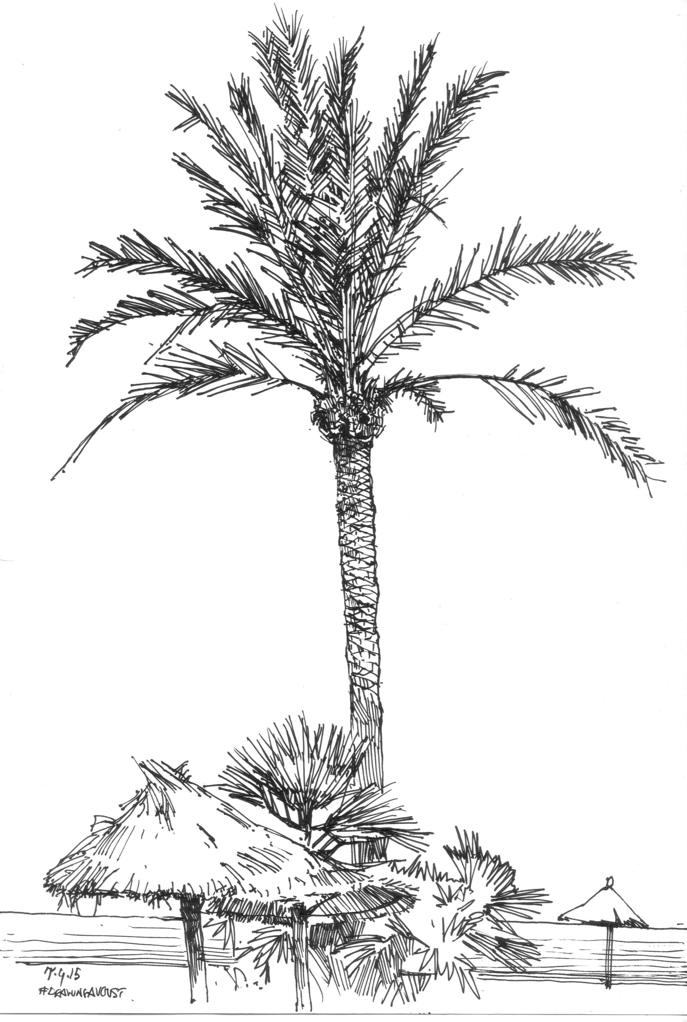 Palm Tree Drawing - Samantha Bell