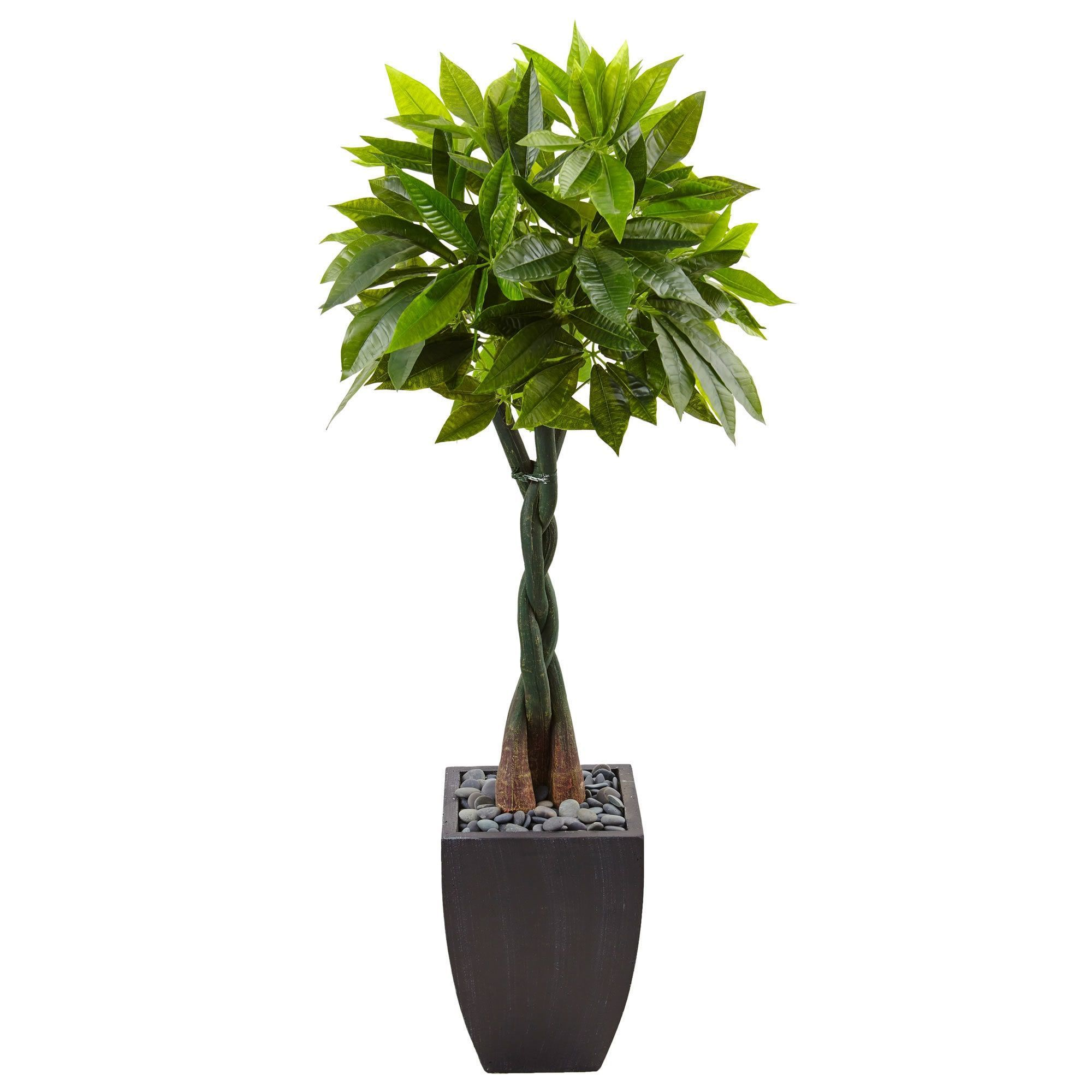 Nearly Natural Black 5foot Money Tree Square Planter