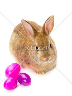 bunny with easter eggs - Brown rabbit with pink easter eggs on white background