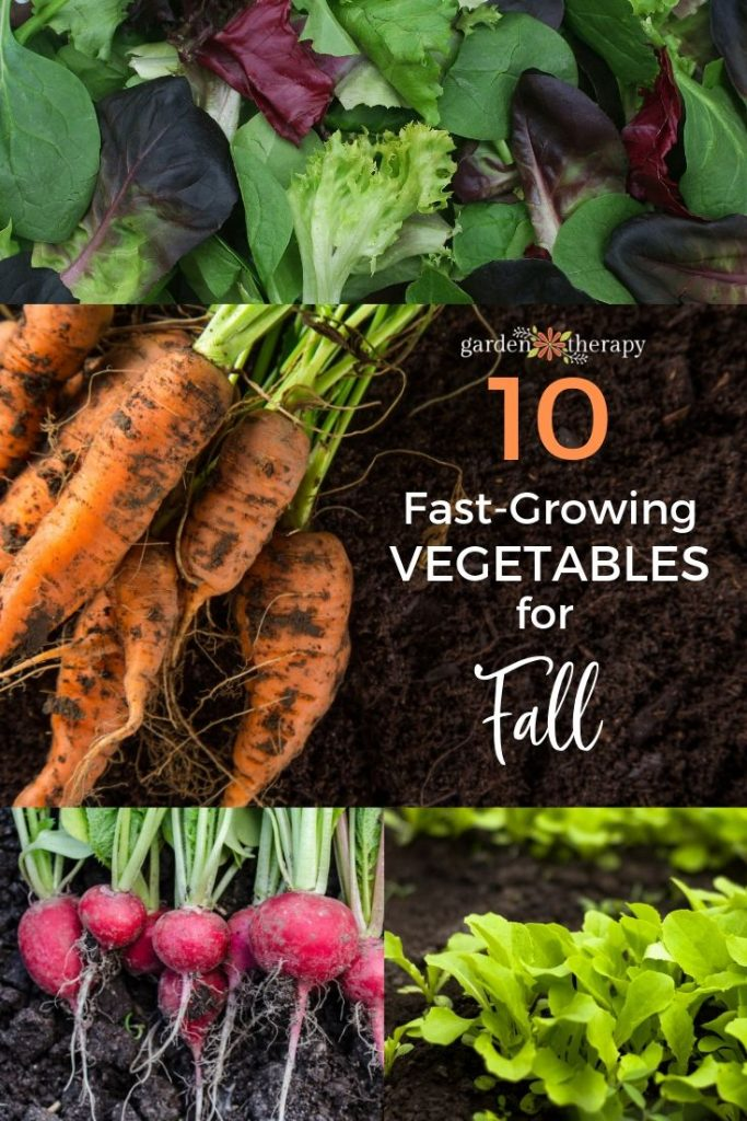 Plant These Speedy Fall Vegetables For A Last Hurrah 400 x 300