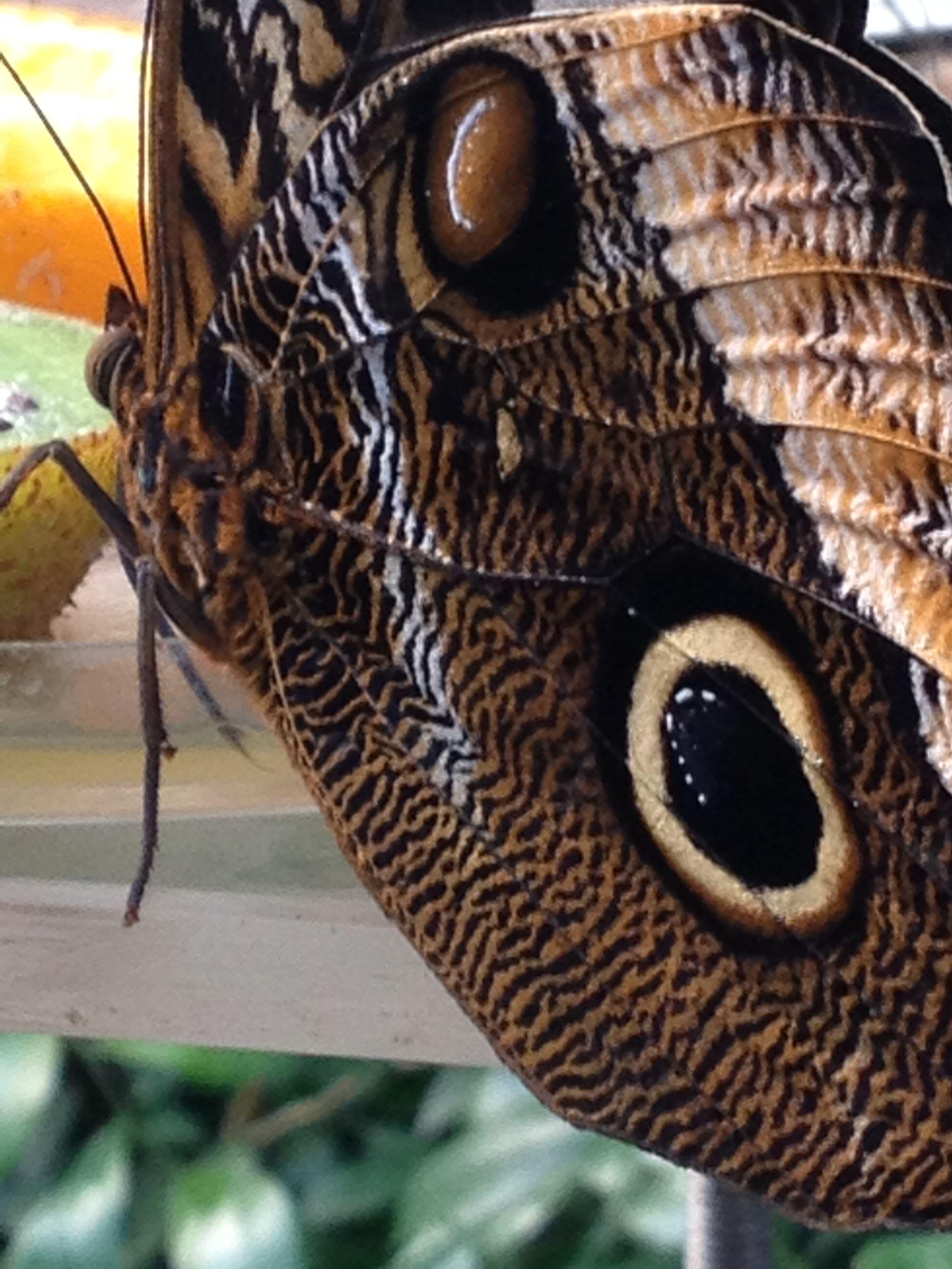 Butterfly Artis