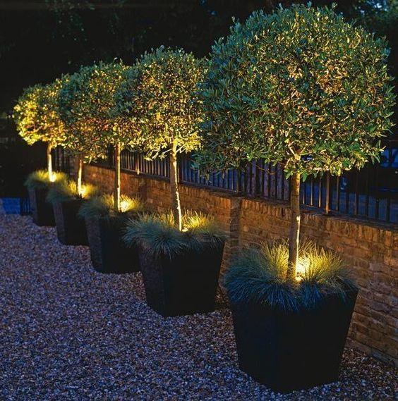 54 iluminacin plantas - Iluminacion De Jardines