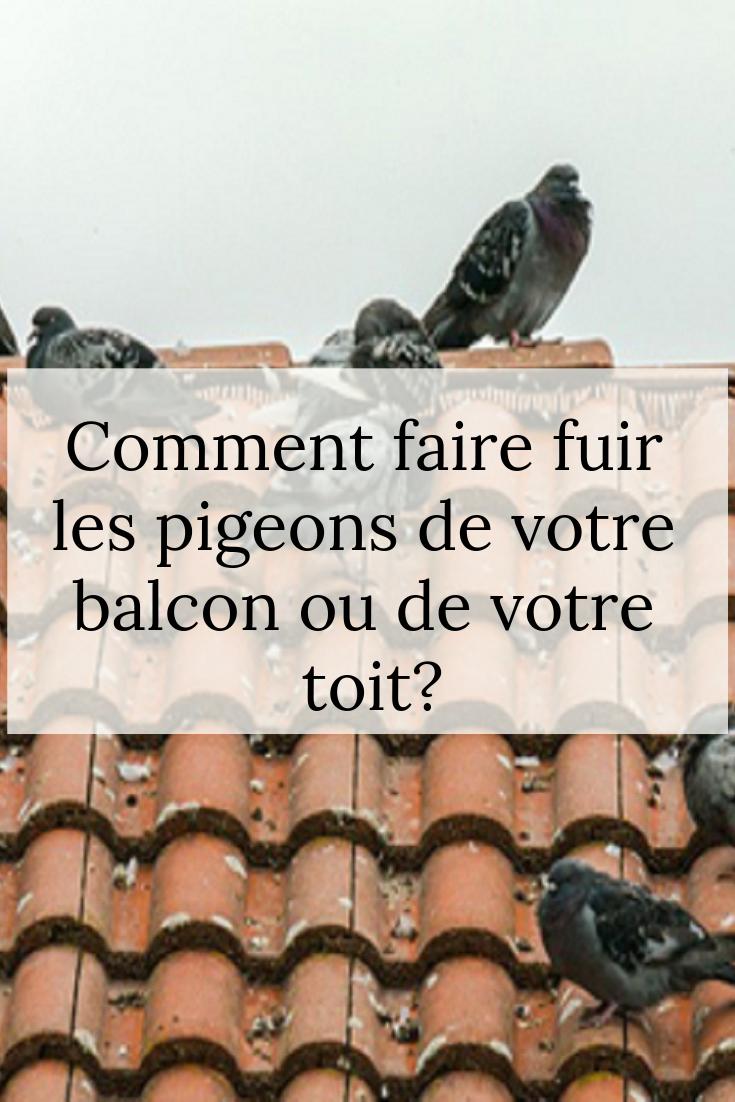 Comment Faire Fuir Les Pigeons : comment, faire, pigeons, Épinglé, Trucs, Astuces