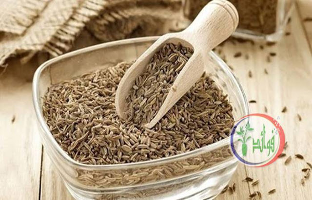 فوائد الكمون المغلي وأضرار الإفراط في شربه How To Dry Basil Herbs Cumin