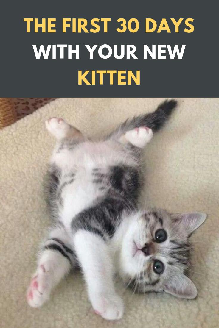 The First 30 Days With Your New Kitten Cats Cat Catsofinstagram Of Catstagram Beautifulcats Pets Catlover Kitten Adoption Kitten Care Newborn Kittens