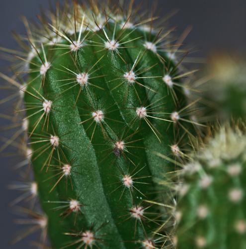 Cómo tener unos cactus preciosos - 9 pasos - unComo