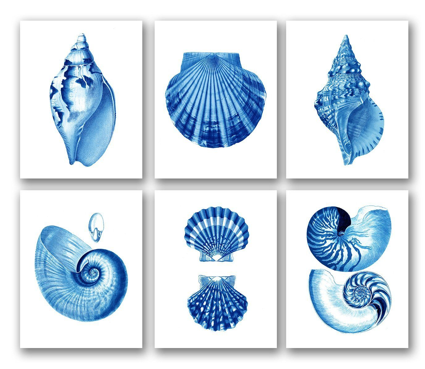 Amazon.com: Blue Seashells Decor Art Prints Set of 6 unframed Beach Coastal Decor Wall Art: Posters & Prints UNFRAMED  $44.00