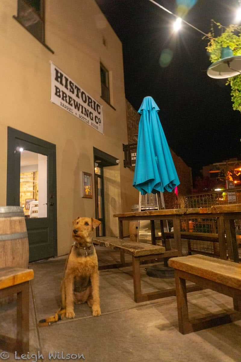 9 Pet Friendly Things To Do In Flagstaff Arizona Road Trip With