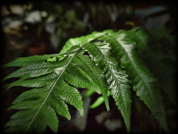 A fern leaf by Lorraine Robinson