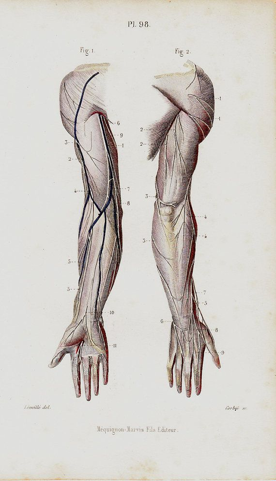 1843 Antique ANATOMY engraving, forearm and arm veins hands ...