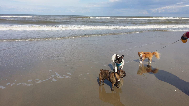 Noordwijk Urlaub Mit Hund In Holland Holland Niederland Urlaub Mit Hund Ferienhaus In Holland Holland