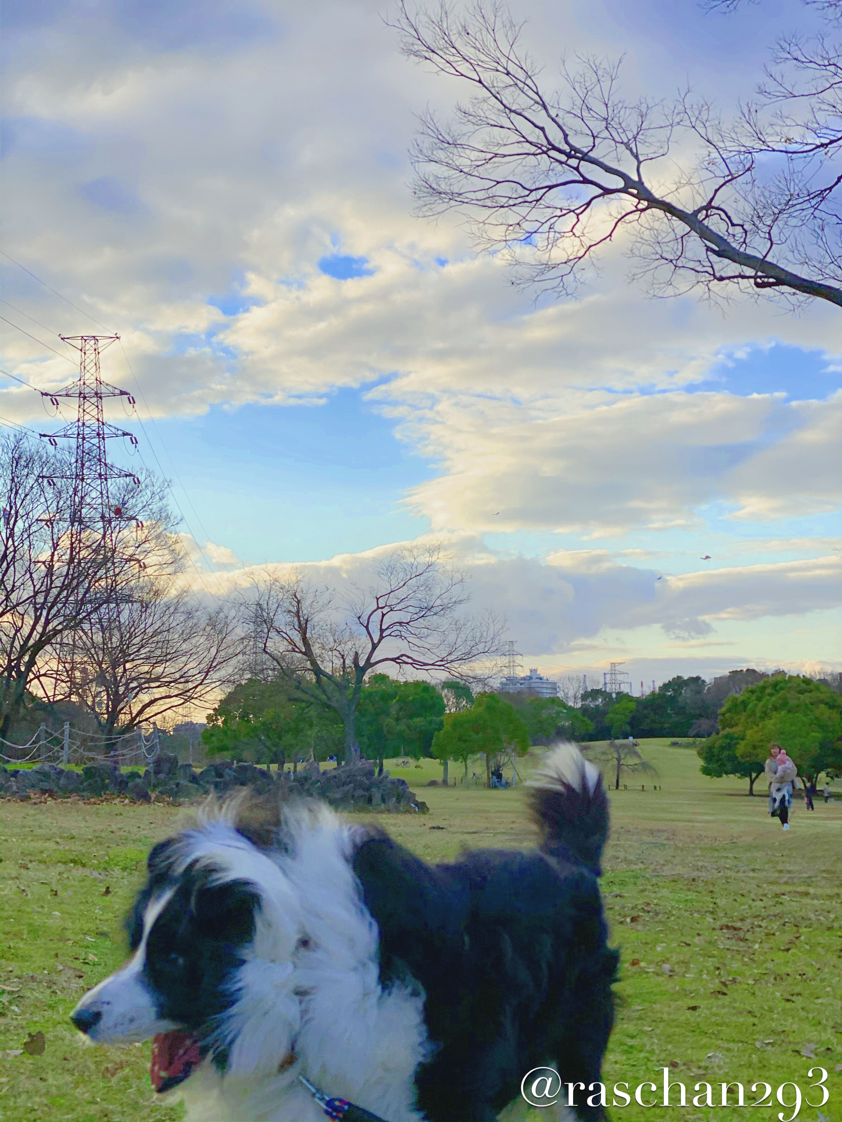 Bordercollie Dog Cute ボーダーコリー 可愛い 犬 愛犬 Pet ペット ワンちゃん 白黒 Whiteblack Japan Jepang Osaka Sakaicity お散歩 お散歩中 かわいい Jalanjala 2020 ボーダーコリー ペット 公園