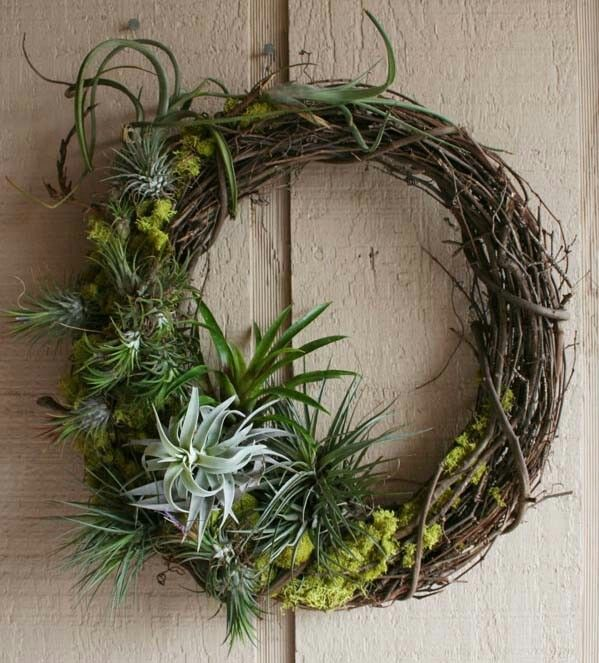 Air Plant Wreath …